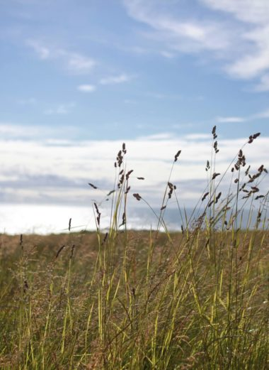 blue sky and brown grasses